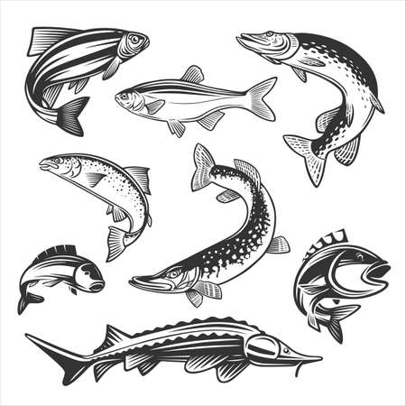 Monochrome illustration with a fishes for design on a fishing theme. Ilustracja