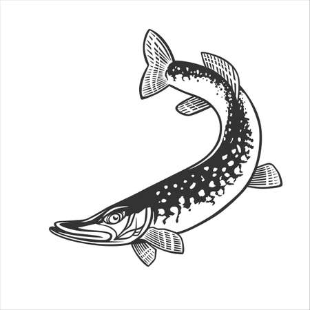 Monochrome illustration with a pike for design on a fishing theme.