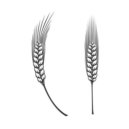 Spike of wheat. Black and white vector objects.