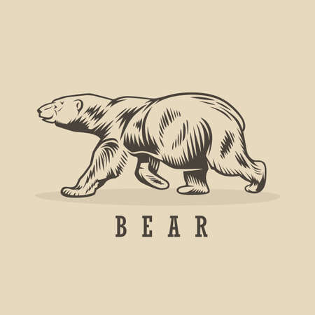 Vector bear illustration. Monochrome illustration with a bear. Vektorgrafik