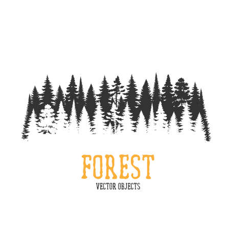 Vector forest illustration. Monochrome illustration with a forest. 向量圖像