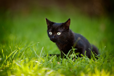 wide eyed: Black kitten sitting in grass in the garden with wide eyed expression.