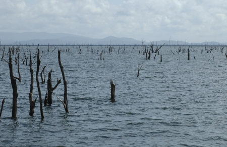 Lake afobaka in Surinam with the stakes that are typical for the lake. Stock Photo