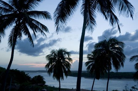 tropical sunset with palmtrees in the foreground