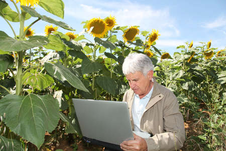 agronomist: Agronomist in sunflowers field with laptop computer