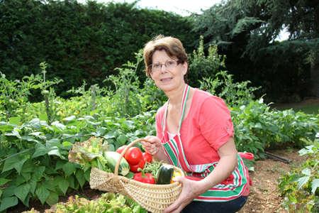 domestic garden: Senior woman picking vegetables in kitchen garden Stock Photo