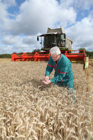 Farmer in wheat field with harvester photo