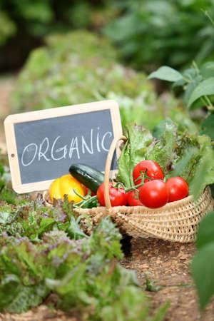 organic food: Basket of organic vegetables