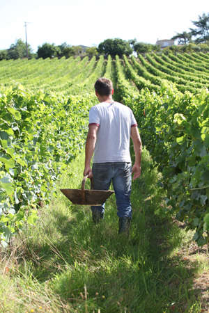 Winegrower in vine rows photo