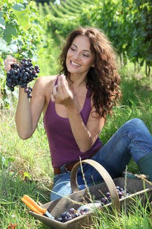Woman testing grapes in vineyard photo