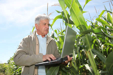agronomist: Agronomist in corn field with laptop computer