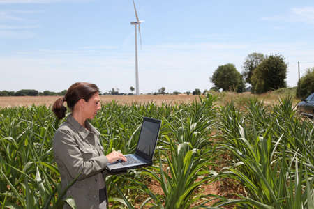agronomist: Agronomist in corn field Stock Photo