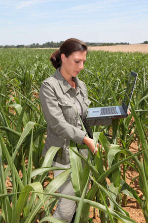 Agronomist in corn field Stock Photo - 7698911