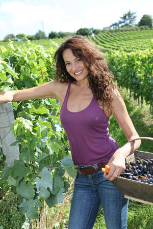 40 year old woman: Winegrower woman standing in vine rows with basket of grapes