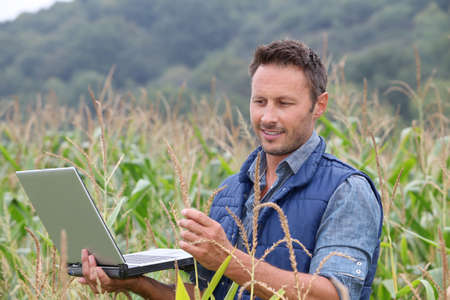 Agronomist analysing cereals with laptop computer Stock Photo - 7954400