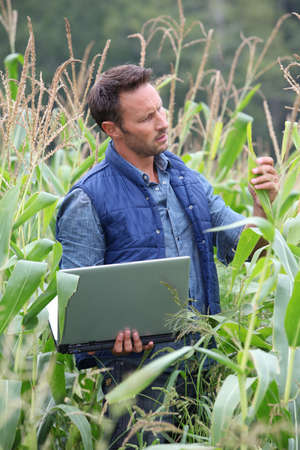 Agronomist analysing cereals with laptop computer photo