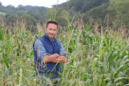 agronomist: Agronomist analysing cereals in corn field Stock Photo