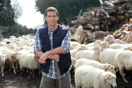 herdsman: Shepherd standing by sheep in meadow