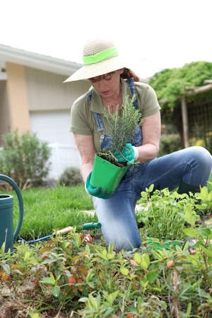 Senior woman gardening in spring time Stock Photo - 9479708