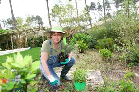 mujer arrodillada: Mujer Senior jardiner�a en primavera