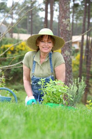 ひざまずく: 年配の女性の春の時間の園芸 写真素材