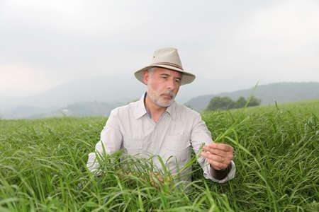 Senior man with hat in farmland photo