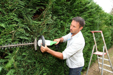 hedge: Man in garden using hedge timmet