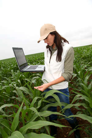 agronomist: Agronomist examining plant in corn field