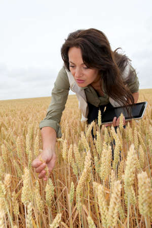 Woman with electronic tablet analysing wheat ears photo