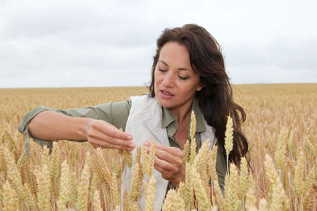 agronomist: Woman agronomist looking at wheat ears