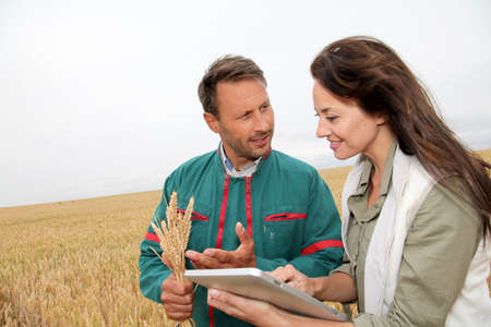 agronomist: Agronomist with farmer looking at wheat ears