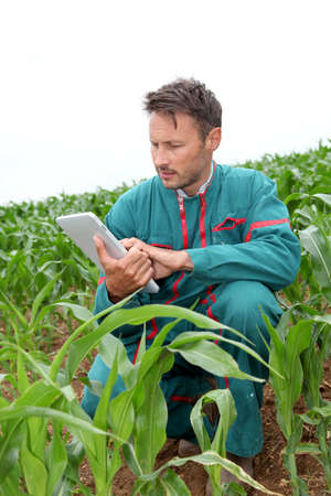 knelt: Farmer with electronic tablet analysing corn field Stock Photo