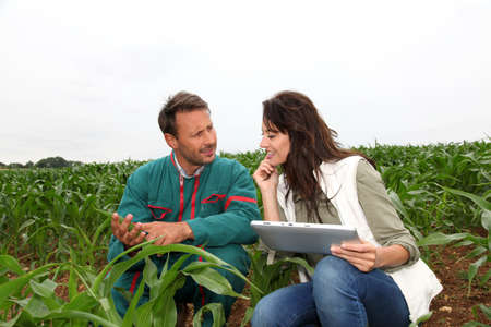 knelt: Farmer and researcher analysing corn plant