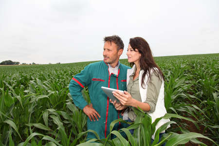Farmer and researcher analysing corn plant photo