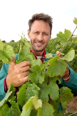 Winegrower standing in vineyard photo