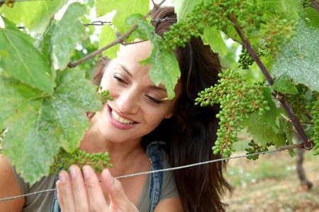 salopette: Femme observant les raisins dans la vigne Banque d'images