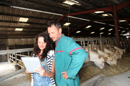 stock breeding: Couple of farmers using electronic tablet Stock Photo