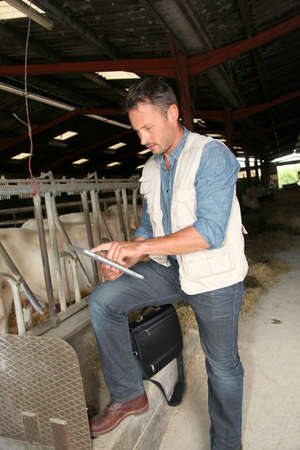cattle breeding: Breeder in barn with electronic tablet
