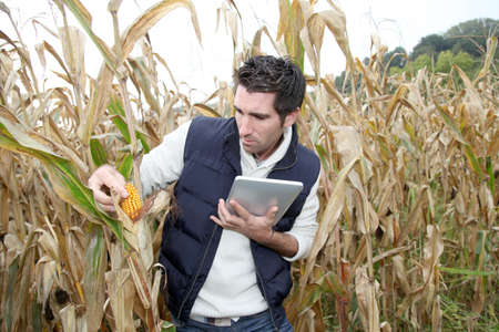 agronomist: Agronomist analysing cereals with electronic tablet