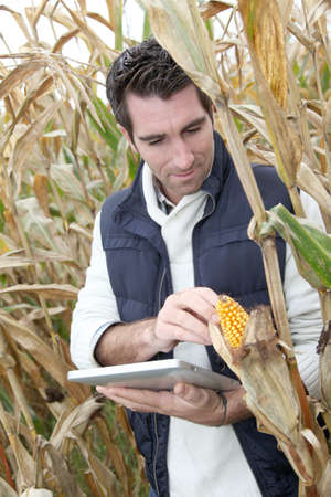 Agronomist analysing cereals with electronic tablet photo