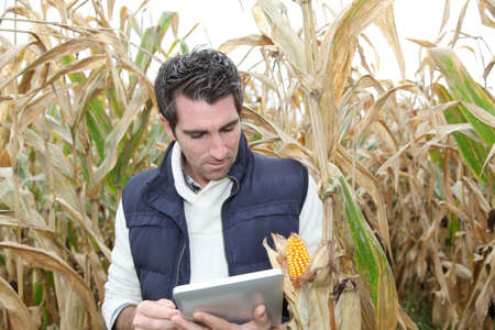 Agronomist analysing cereals with electronic tablet Stock Photo - 10979063