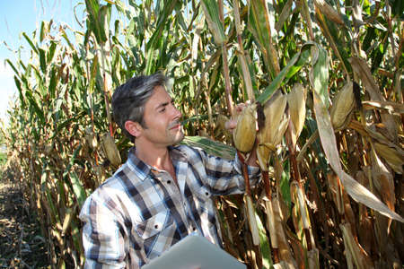 Agronomist in corn field with electronic tablet photo