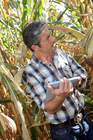 agronomist: Agronomist in corn field with electronic tablet