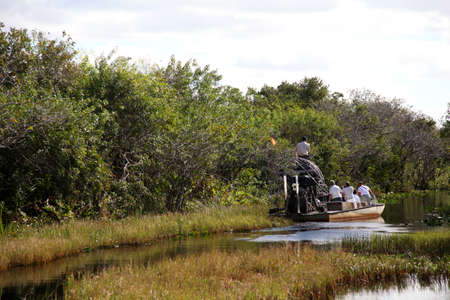 everglades: Airboat ride on the Everglades national park