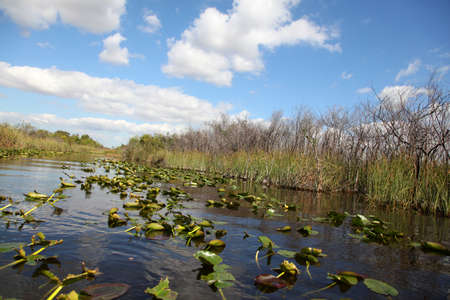 sawgrass: Ecosystem vegetation of the Everglades National Park Stock Photo