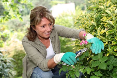 Senior woman taking care of flowers in garden photo