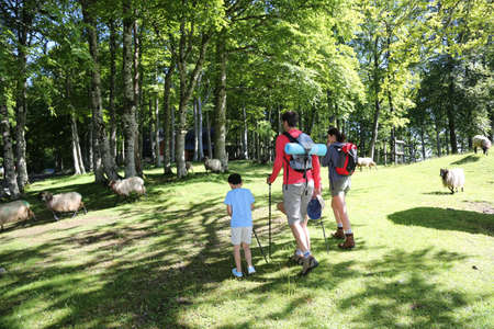rambling: Back view of family walking in mountain forest Stock Photo