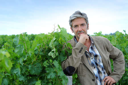 Winemaker standing in vineyard on harvesting season photo