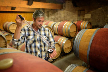 testing: Winemaker getting sample of red wine from barrel Stock Photo