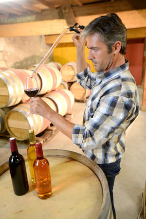 cave: Winemaker se �chantillon de vin rouge de baril Banque d'images